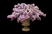 All - Lilacs In A Green Vase - Flowers - Spring Bouquet by Andee Photography