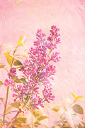 Texture Floral Framed Prints - Lilacs in Pink Framed Print by Kay Pickens