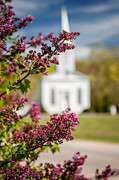 Meetinghouse Framed Prints - Lilacs of quintessential New England Framed Print by Thomas Schoeller