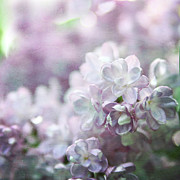 Lilacs Photos - Lilacs by Sylvia Cook