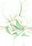 Lilie Print by Torsten Bahr