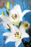 Stems Posters - Lilies against blue wall Poster by Garry Gay