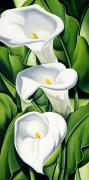 Catherine White Painting Metal Prints - Lilies Metal Print by Catherine Abel