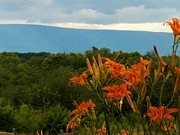 Shenandoah Valley Posters - Lilies in the Valley Poster by Joyce  Kimble Smith