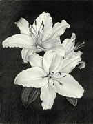 Lilies Print by Nicola Butt