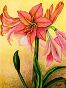 Colored Pencils Drawings - Lilies by Zulfiya Stromberg