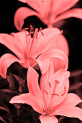 Delicate Originals - Lilly flower  by Tommy Hammarsten