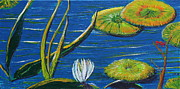 Lilly Pond Paintings - Lilly Pads by Stefan Duncan