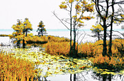 Dan Carmichael - Lillypad Wonderland - North Carolina Coast II