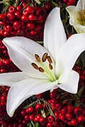 Lilies Prints - lily and Pyracantha Print by Garry Gay
