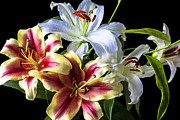 Lilies Framed Prints - Lily bouquet Framed Print by Garry Gay