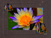 The Lotus Flower Prints - Lily Collage Print by Cheryl Young