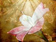 Judy Hall-Folde - Lily in Lenabem Lightwaves