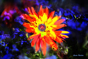 Lily In Vivd Colors Print by Gunter Nezhoda