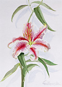 Botanical Paintings - Lily by Izabella Godlewska de Aranda