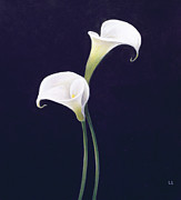 White Floral Prints - Lily Print by Lincoln Seligman