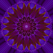 Mandala Photos - Lily Mandala Image 1 by Carrie Cranwill