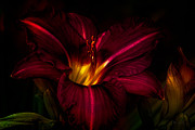 Pollen Metal Prints - Lily Number Nine Metal Print by Bob Orsillo
