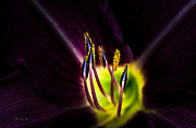 Abstract Floral Photos - Lily Of The Forest by Bob Orsillo