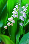 Lily Of The Valley Posters - Lily of the valley Poster by Alexey Stiop