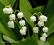 Lily Of The Valley Posters - Lily of the Valley Poster by Bruce Nutting