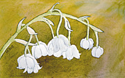 Laurel Best - Lily of the Valley