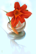 Graphical Digital Art Originals - Lily on sea shell by Li   van Saathoff