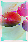 Multiples Photos - Lily Pad 1 by Susanne Van Hulst