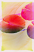 Multiples Photos - Lily Pad 2 by Susanne Van Hulst