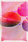 Multiples Photos - Lily Pad 3 by Susanne Van Hulst
