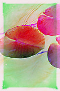 Multiples Photos - Lily Pad 4 by Susanne Van Hulst