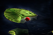 Dan Quam - Lily pad and fishing...