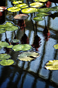 Gail Gates - Lily Pads at Como Park