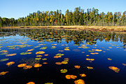 Calm Waters Prints - Lily Pads in Autumn Print by Larry Ricker