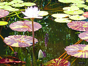 Lilies Art - Lily Pads by Methune Hively