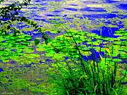 Lake Relections Prints - Lily Pads On The Lachine Canal Summer Landscape Scenes Colors Of Quebec Art Carole Spandau Print by Carole Spandau