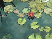Lillies Painting Prints - Lily Pond Print by David Stribbling