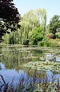 Christiane Schulze Prints - Lily Pond - Monets Garden - France Print by Christiane Schulze