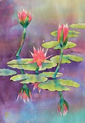 Watercolor  Paintings - Lily Pond by Robert Hooper