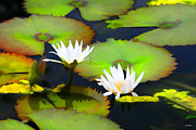 Lily Pad Photograph Framed Prints - Lily Pond Framed Print by Tom Prendergast