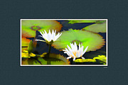 Flower Photographers Posters - Lily Pond with digital mat Poster by Tom Prendergast