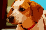 Pound Puppies Prints - Lily the Beagle Print by Brian Druggan