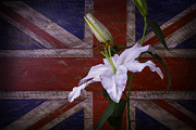 Garry Gay - Lily With British Flag