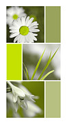 Assorted Digital Art Posters - Lime Green Flowers Collage Poster by Christina Rollo