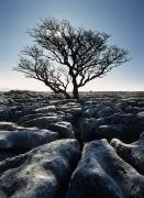 Featured Posters - Limestone Pavement At Twisleton Scars Poster by Ian Cumming