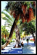 Lincoln Photo Originals - Lincoln Road in Miami Beach by Dora Sofia Caputo