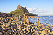 Holy Island Prints - Lindisfarne Castle Holy Island Northumberland Print by Colin and Linda McKie
