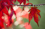 Reds Of Autumn Photo Posters - Line of Reflections Poster by Anne Gilbert