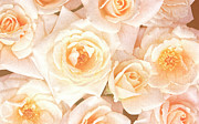 Engagement Mixed Media Prints - Linen Roses Print by Zeana Romanovna