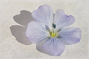 Macro Paintings - Linen Watercolour by John Edwards
